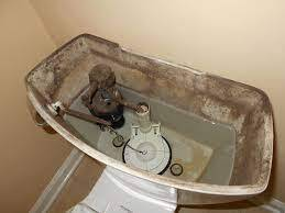 Causes and How to Get Rid of Black Mold in Toilet Bowl and Tank